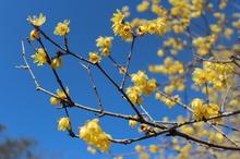 立春を迎えるにあたり・・✿
